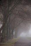 Fuga da floresta entre as árvores de faia em um dia nevoento, chuvoso do outono Imagem de Stock
