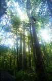 Fuga da floresta húmida Imagens de Stock
