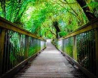 Fuga da floresta úmida do resto de Maits na grande estrada do oceano, Austrália Fotos de Stock Royalty Free