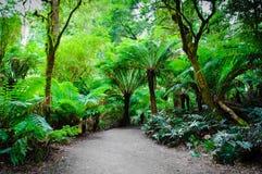 Fuga da floresta úmida do resto de Maits na grande estrada do oceano, Austrália Fotografia de Stock Royalty Free