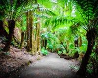 Fuga da floresta úmida do resto de Maits na grande estrada do oceano, Austrália Fotos de Stock