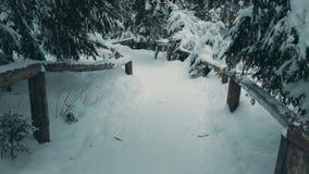 Fuga da floresta da montanha na neve Fotografia de Stock