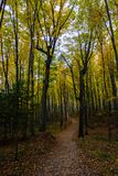 Fuga da floresta no nacional representado das rochas Lakeshore, Munising, MI Fotografia de Stock Royalty Free