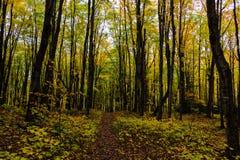Fuga da floresta no nacional representado das rochas Lakeshore, Munising, MI Imagem de Stock