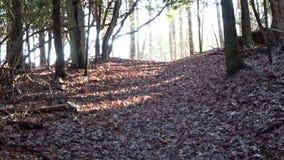 Fuga da rocha do castelo do cruzamento da silhueta do esquilo no parque estadual de Grandview filme