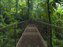 Fuga da selva Imagem de Stock