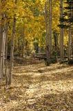 Fuga das folhas caídas Foto de Stock Royalty Free