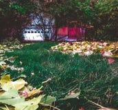 Fuga das folhas no quintal Imagens de Stock