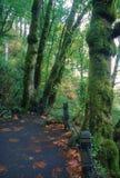 Fuga das quedas de Multnomah Imagens de Stock Royalty Free