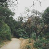 Fuga de caminhada Foto de Stock