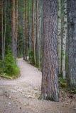 Fuga de caminhada Imagem de Stock