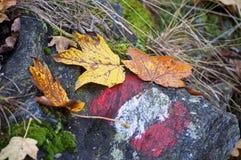 A fuga de caminhada assina dentro o outono imagens de stock