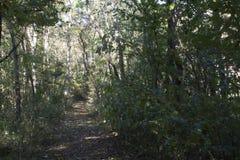 Fuga de caminhada através da floresta fotografia de stock royalty free