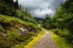 Fuga de caminhada através de Forest Landscape On The Isle cênico de Skye In Scotland fotos de stock