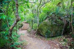 Fuga de caminhada com escadas de madeira, montagem Manaia Foto de Stock