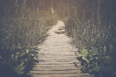 Fuga de caminhada com luz solar fotografia de stock royalty free