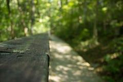 fuga de caminhada da floresta Imagem de Stock Royalty Free