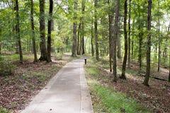 fuga de caminhada da floresta Fotografia de Stock Royalty Free
