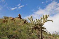 Fuga de caminhada do deserto Foto de Stock Royalty Free