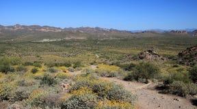 Fuga de caminhada do deserto Imagens de Stock Royalty Free