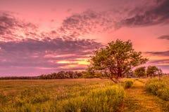 Fuga de caminhada do prado no por do sol fotografia de stock royalty free