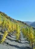 Fuga de caminhada do vinho tinto, Ahr, Rhineland-palatinado, Alemanha Foto de Stock Royalty Free
