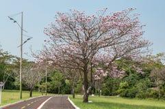 Fuga de caminhada e de ciclagem muito bonita em um parque com grandes vistas Fotografia de Stock