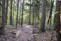 Fuga de caminhada, floresta do estado dos montes de Hocking imagens de stock royalty free
