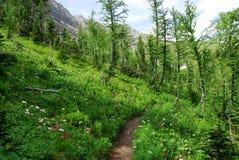 Fuga de caminhada na floresta foto de stock royalty free