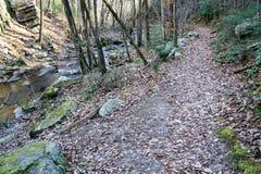 Fuga de caminhada nas madeiras - 2 fotografia de stock