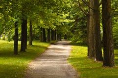 Fuga de caminhada nas madeiras Imagem de Stock