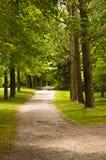 Fuga de caminhada nas madeiras Imagem de Stock Royalty Free