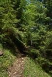 Fuga de caminhada nas montanhas Fotografia de Stock Royalty Free