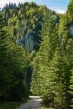 Fuga de caminhada nas montanhas Fotos de Stock