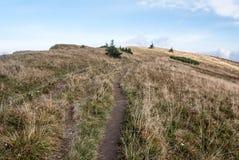 Fuga de caminhada no prado da montanha com os arbustos pequenos em montanhas de Mala Fatra Imagem de Stock Royalty Free