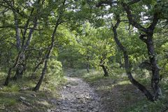 Fuga de caminhada provence Imagem de Stock