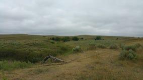 Fuga de gado da pradaria de Kansas do sudoeste Imagem de Stock Royalty Free