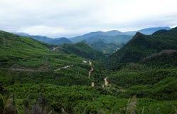 Fuga de Ho Chi Minh, floresta, montanha, terreno imagem de stock royalty free