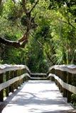 Fuga de madeira sobre o samp nos marismas Nationalpark foto de stock royalty free