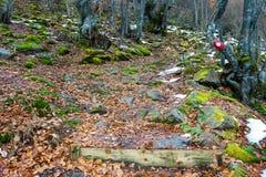Fuga de montanha coberta com as folhas, a neve e as rochas com musgo verde fotos de stock