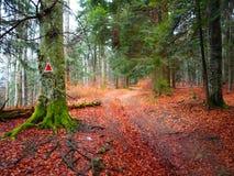 Fuga de montanhas de Bucegi Imagens de Stock