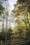 Fuga de Natrue em North Carolina fotos de stock