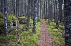 Fuga de natureza Imagem de Stock Royalty Free