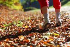 Fuga de passeio do país transversal da mulher na floresta do outono Foto de Stock Royalty Free