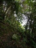 Fuga de Sandy Cruz, Saba Fotografia de Stock