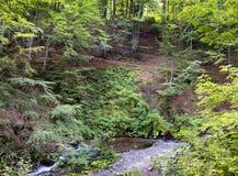 Fuga de suspensão nos arvoredos da floresta da montanha na luz solar da manhã sobre o córrego Imagem de Stock Royalty Free