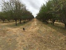 Fuga del frutteto Fotografia Stock