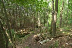 Fuga dentro de Bruce Trails Splitrock Narrows foto de stock