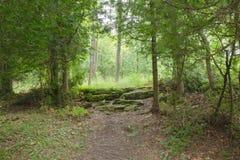 Fuga dentro de Bruce Trails Splitrock Narrows foto de stock royalty free