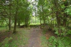 Fuga dentro de Bruce Trails Splitrock Narrows imagem de stock royalty free